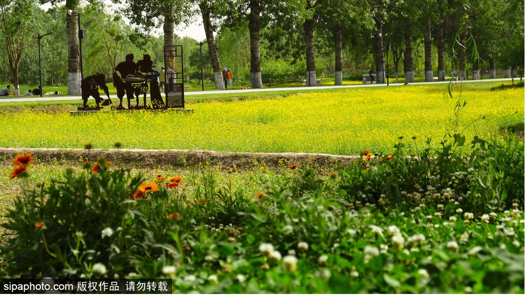 The heat is coming! Come to this park in Beijing to cool down. There are few people, free of charge and no need to make an appointment