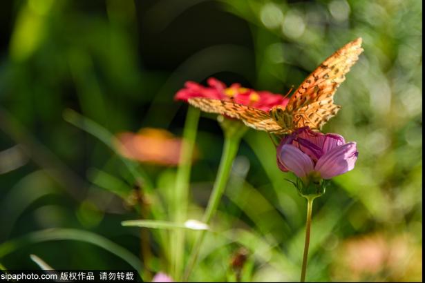 Nangong Wuzhou plant park