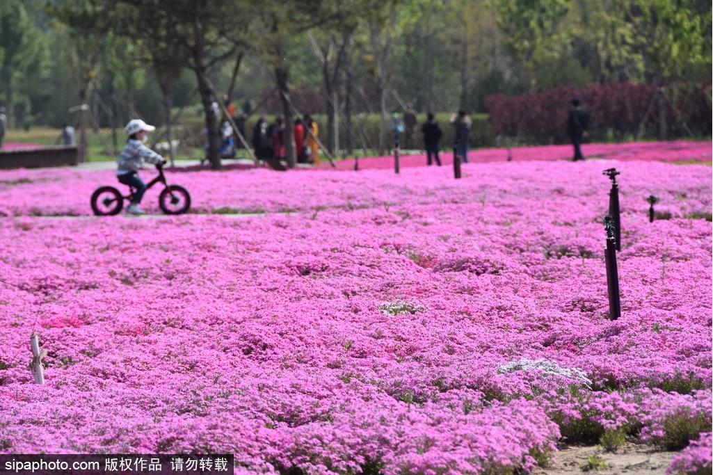 Ten wetland parks around Beijing to spend the hot summer