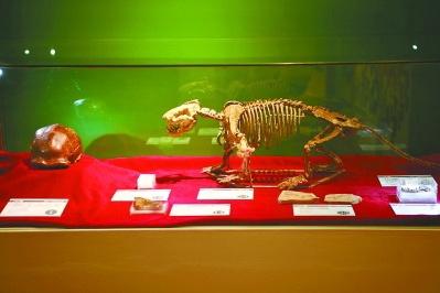 中国古动物馆开设90周年纪念展 珍贵化石再现远古中国演化传奇