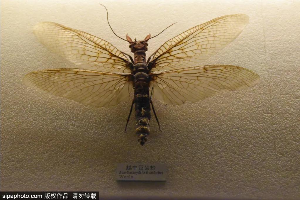 중국 최대의 동물 전문박물관, 국가동물박물관