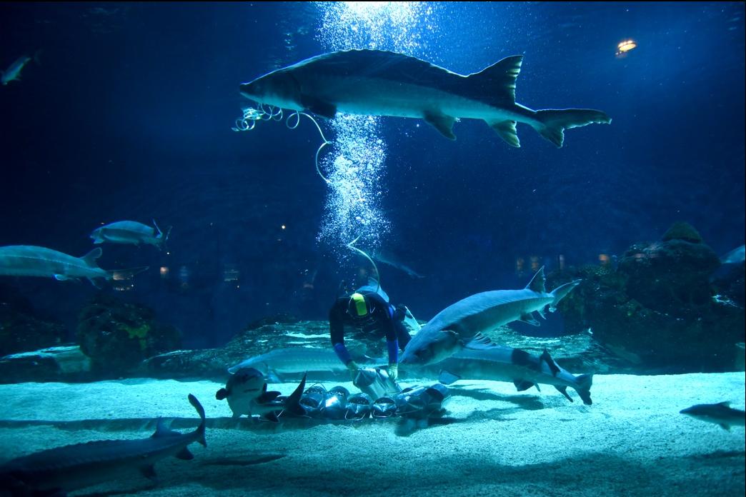 """北京海洋館""""海洋吃貨養成記""""第二季盛大來襲:暢游藍色深海 共護地球家園"""