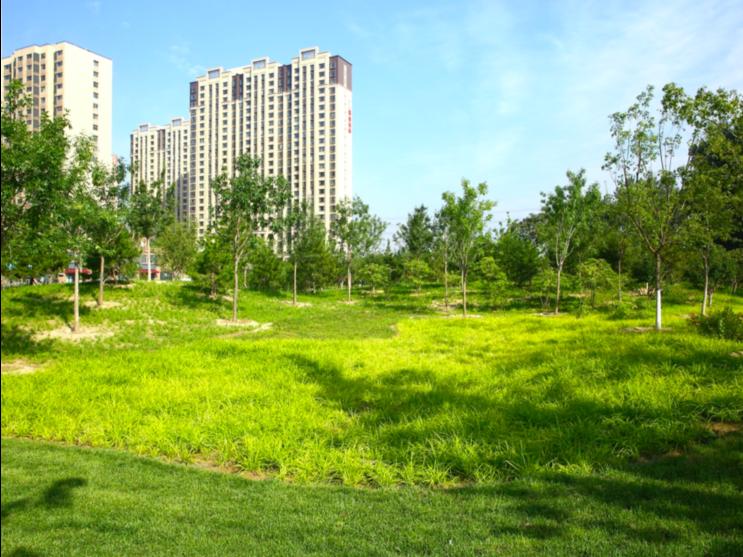 家門口的健身地:朝陽區匯星苑城市森林公園