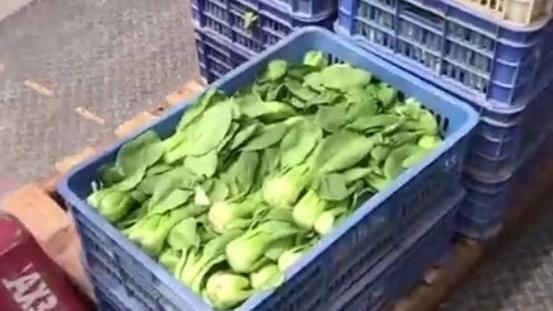 货源充足,超市发双榆树店蔬菜供应量增四倍