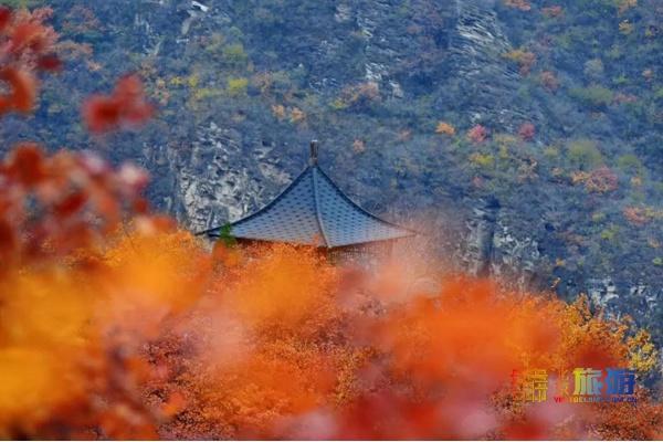 最后一周!北京這個堪比香山的賞紅地,正是一年中最美的時候!