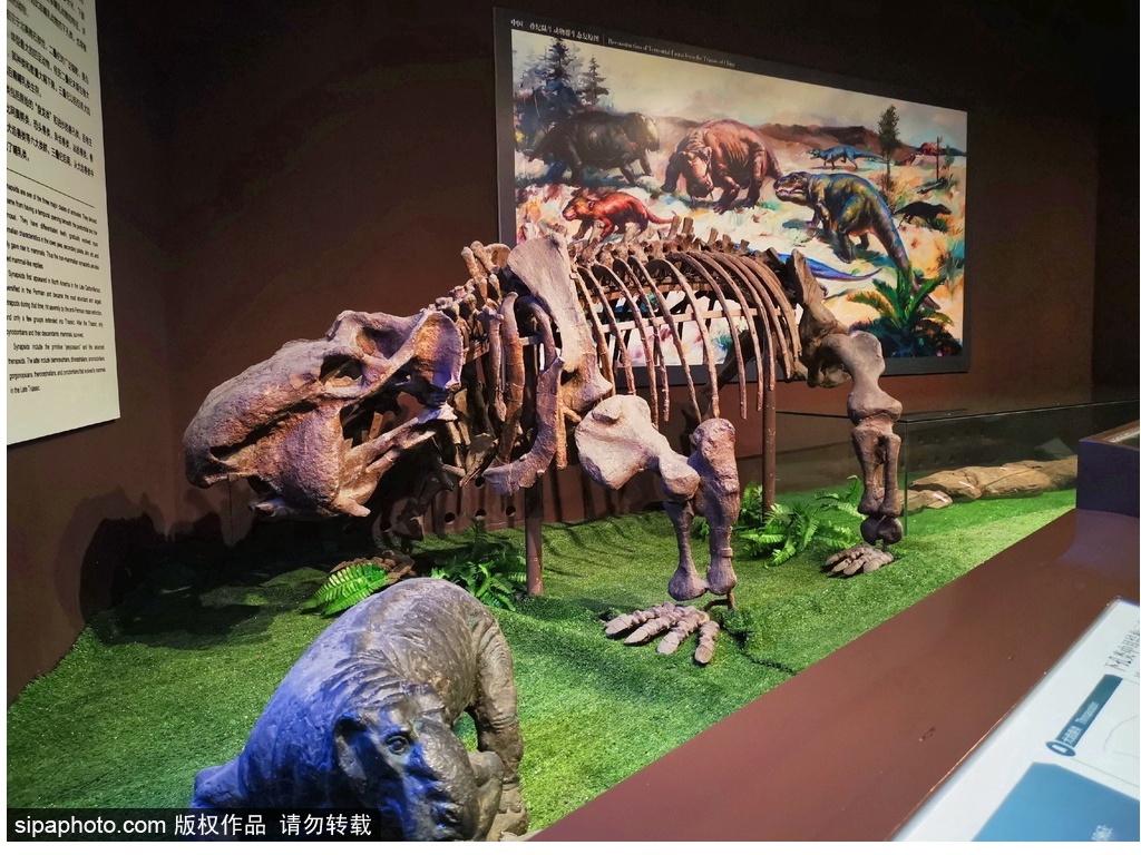 아시아 제일, 중국 고동물관 中国古动物馆