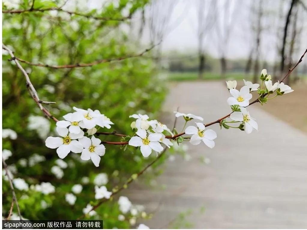 """人少景美!空气清新!北京藏着的这个""""小江南"""",你竟然不知道"""