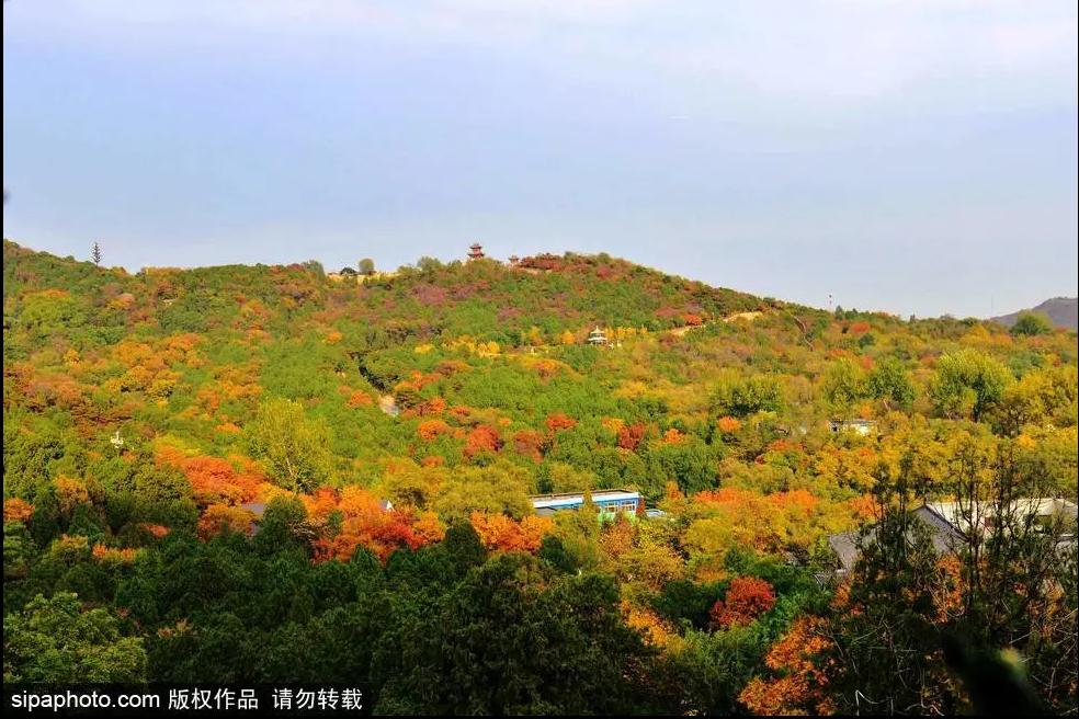 20곳 베이징 가을 단풍 감상 추천지 발표