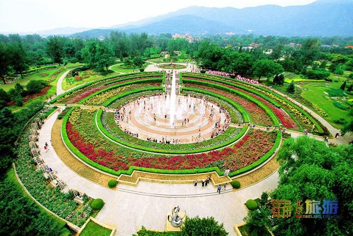 北京2000余万株市花盛开!公园绿地、大街小巷、房前屋后全都有!这11个地方最集中!