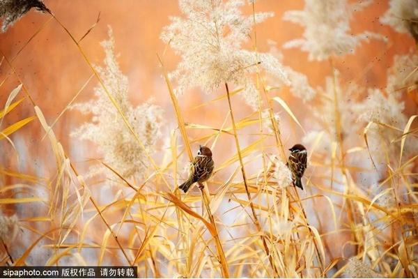 五環內的人間仙境!這里冬日美景即將上線,美醉北京人!