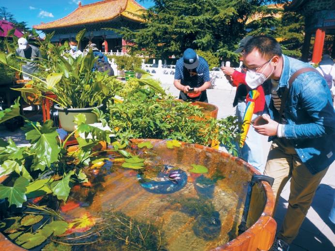 """北京是中国金鱼的发祥地之一 宫廷金鱼""""畅游""""太庙"""