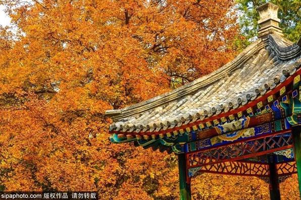 베이징의 가을 추천지