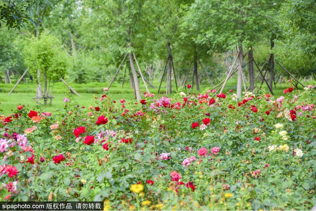 东小口城市休闲公园:赏花、遛娃、健身好去处