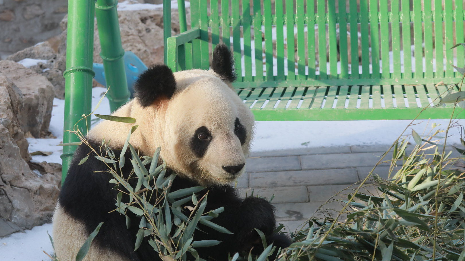 Zoo animals are doing fine, show up online in Beijing amid epidemic