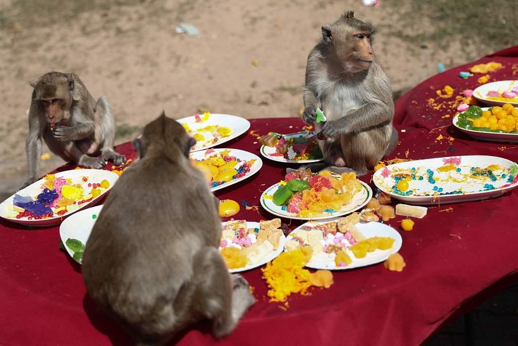 """泰国""""猴都""""华富里迎来飨猴盛会"""