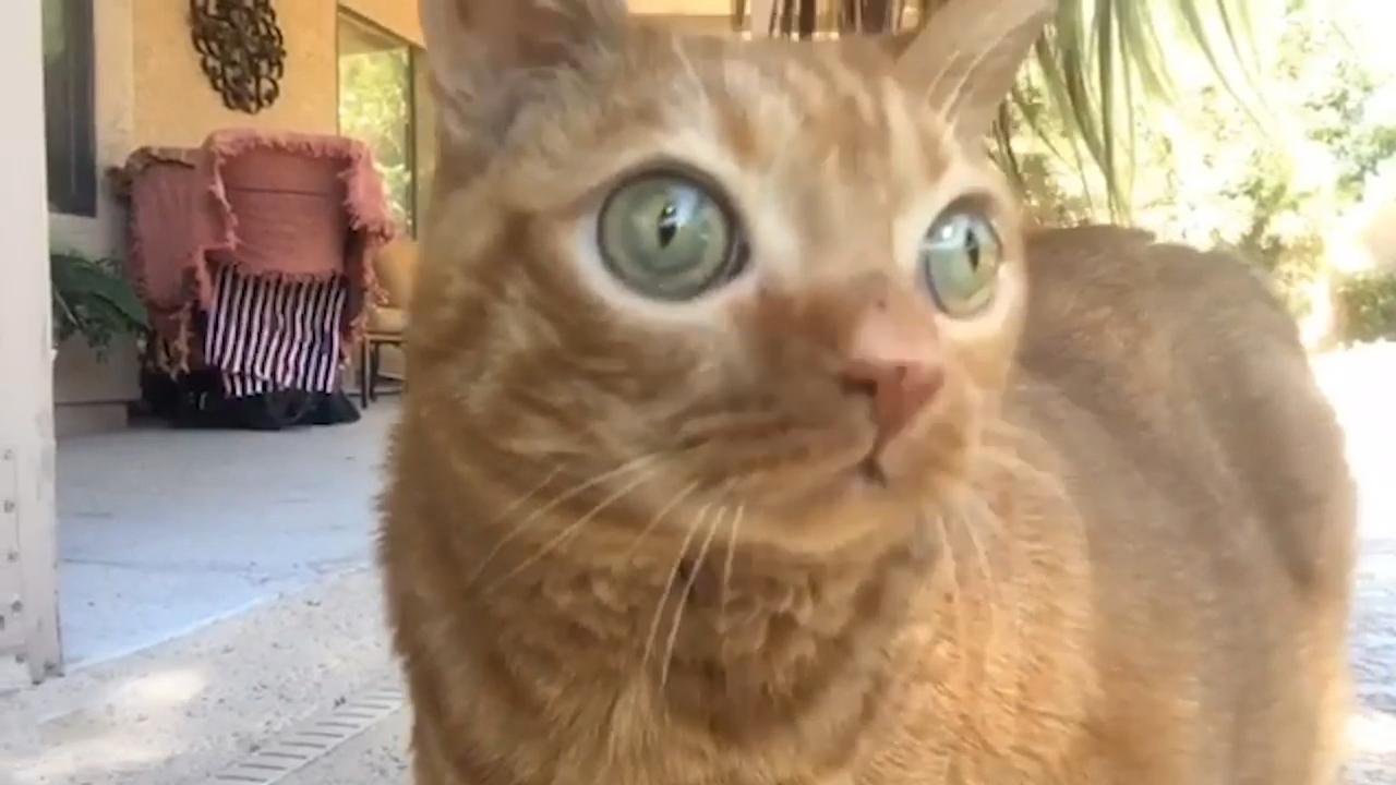 大眼猫咪Potato
